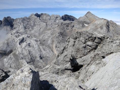 Pico Tesorero in the background